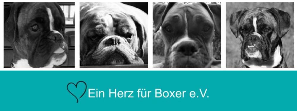 boxer forum hund